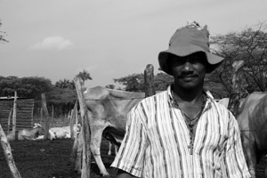 Tomas Ustatie with his cows in Roche, a village threatened with displacement.